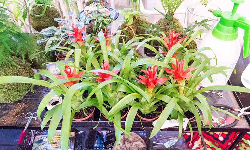 Bromeliads - home improvements
