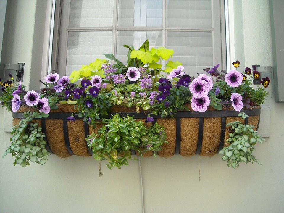backyard ideas-window boxes
