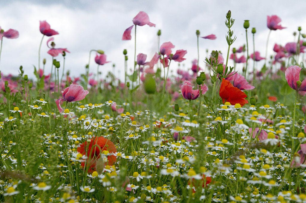 wildflowers for home improvements