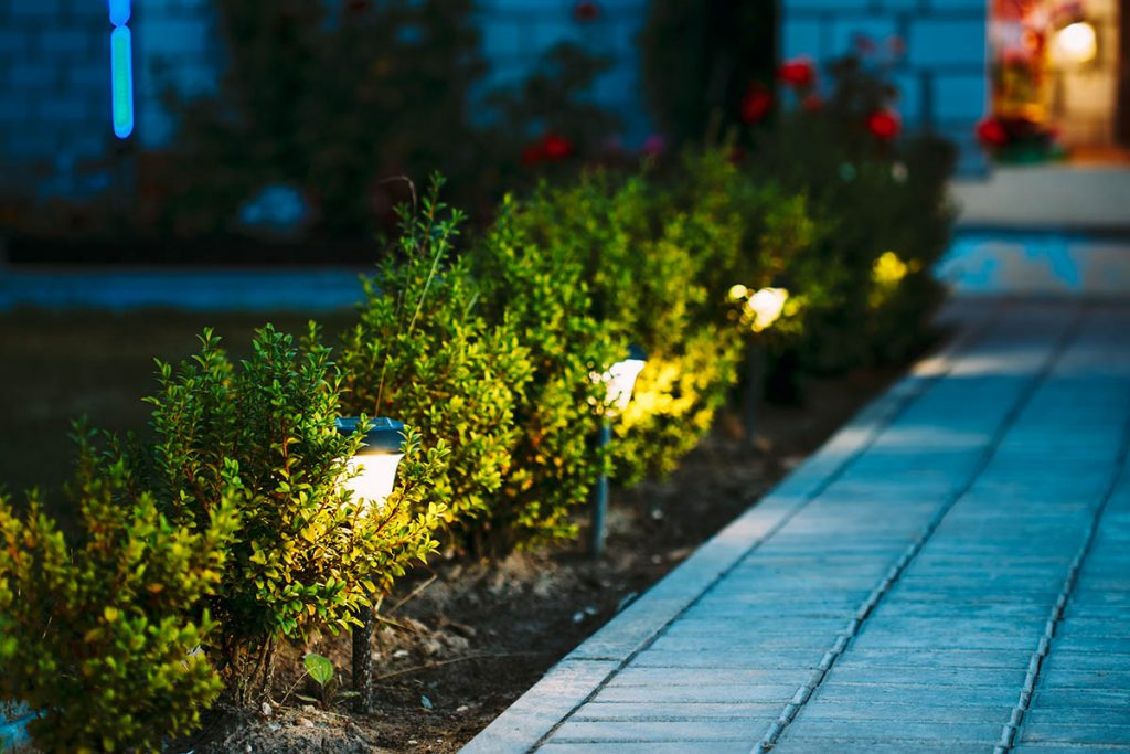 Night View Of Flowerbed With Flowers Illuminated By Energy-Savin